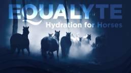 Equalyte-08