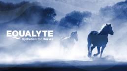 Equalyte-04